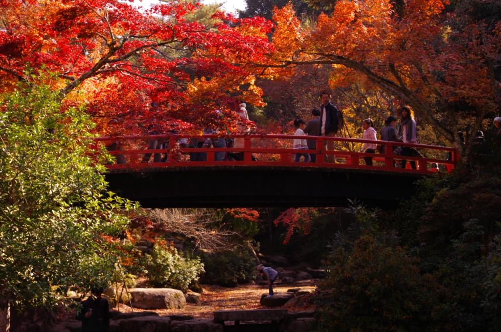 Du lịch mùa thu Nhật Bản ngắm mùa hoa Momiji về